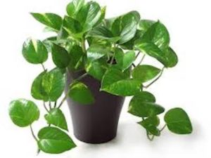 Bring life to your home decor with a plant